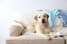 ***¿Cómo Eliminar el Olor a Perro?*** Si tu hogar huele como la casita de tu mascota, pon en práctica estos tips simples para quitar el mal olor del perro de cualquier ambiente......SIGUE LEYENDO EN..... http://comohacerpara.com/eliminar-el-olor-a-perro_12436h.html