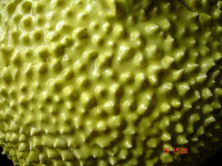 Porcelain Jackfruit
