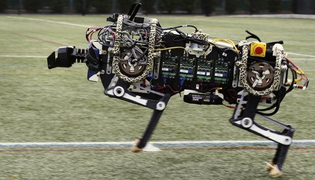 Sebuah robot cheetah diuji coba berlari di Massachusetts Institute of Technology di Cambridge, Massachusetts, Amerika Serikat.. Ilmuwan MIT mengatakan bahwa robot tersebut menjadi robot tercepat dalam berlari.