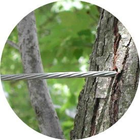 Bartlett Tree Experts: Tree Service and Shrub Care in Dallas, TX