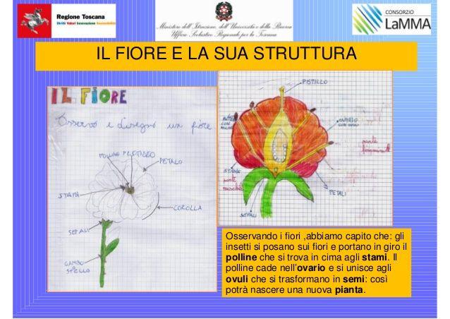 vinci-scuola-primaria-ggalileippt-21-638.jpg (638×452)