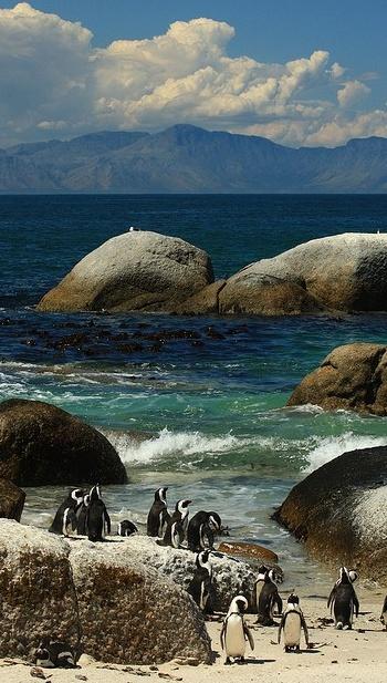 Doen tijdens een roadtrip door Zuid-Afrika: bezoek Boulders Beach bij Kaapstad en bewonder pinguins op het strand!