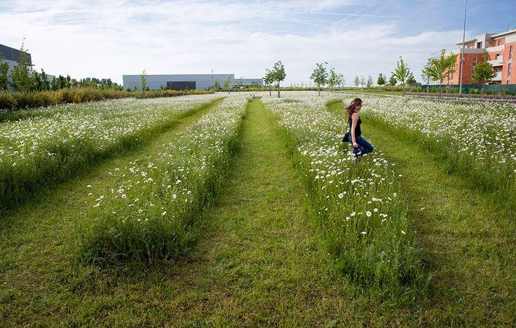 17 migliori idee su Progettazione Del Verde su Pinterest  Progettazione giar...