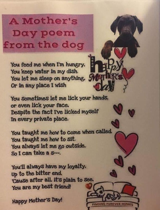 Happy Mother S Day To The Fur Baby Mamas Dog Poems Dog Quotes I Love Dogs
