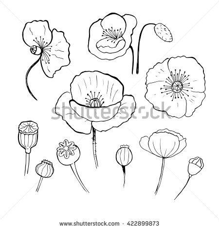 how to draw a poppy flower