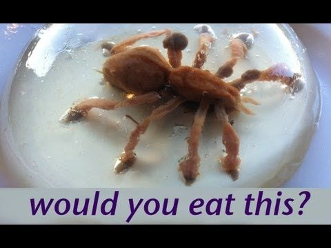 Would you eat a spider? Food Art Jello Art HOW TO COOK THAT Ann Reardon Gelatina   She also shows how to make amazing flowers, so don't be too grossed out by the spider.