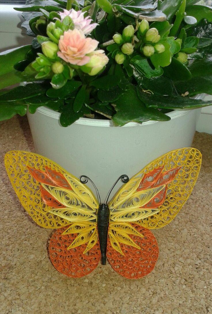 Motyl butterfly