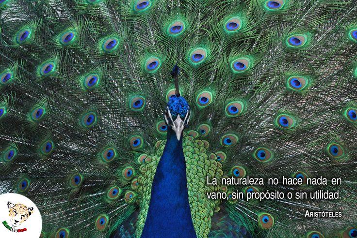 La naturaleza no hace nada en vano... Aristóteles.