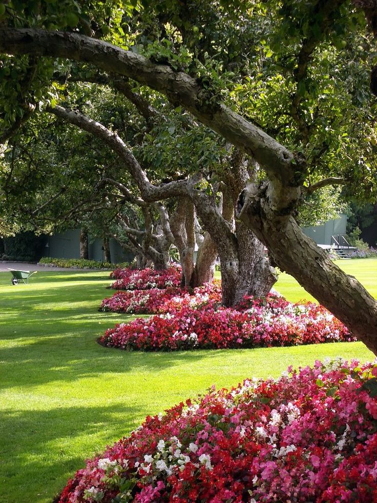 capricho impatiens flower beds around beautiful trees - Flower Garden Ideas Around Tree