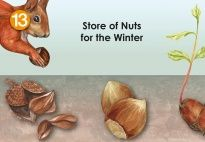 Flip-Flap: The Squirrel's Winter Store for the Squirrel Lapbook for children. More lapbook resources available at www.kigaportal.com!