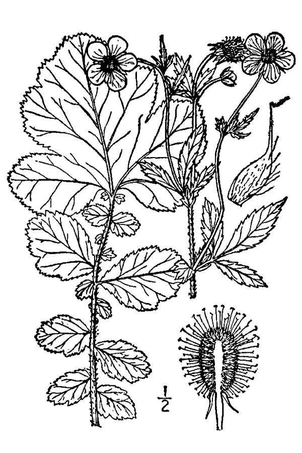 Line Art Java : Best bonsai images on pinterest trees