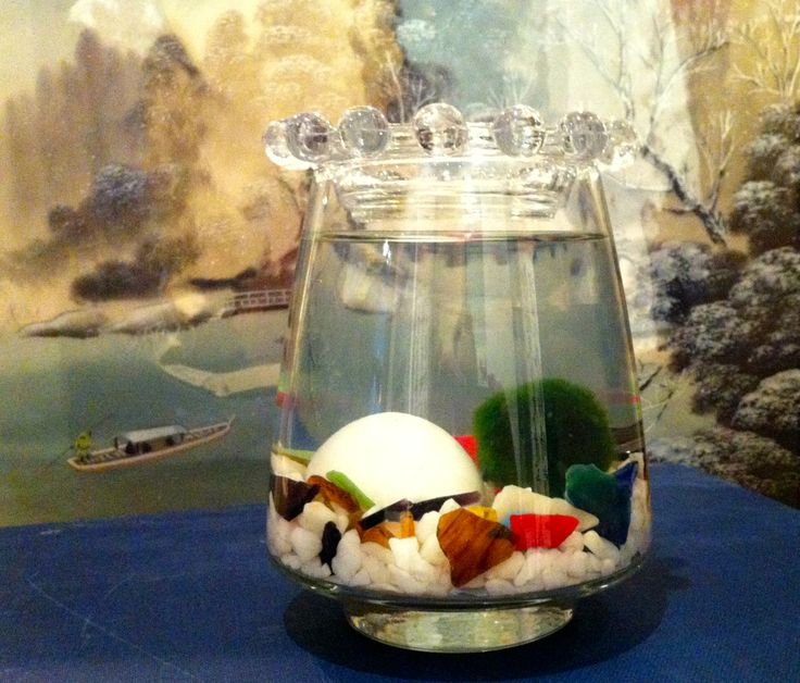 Marimo and The Rock by Biophilia, Guelph, Ontario SOLD