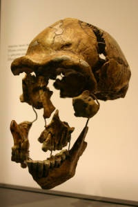 Peking man probably didn't have a kitchen but homo erectus did.