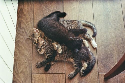 Catpile.Dogs, Cuddling, Cat Sleep, Cat Pile, Naps Time, Kittens, Families, Kitty, Animal