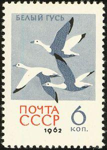 USSR  1962    Snow Goose - Chen caerulescens