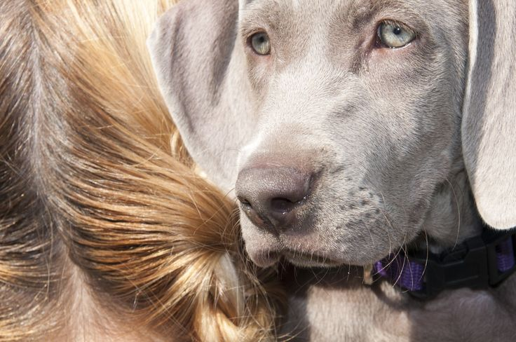 How to choose the best dog shampoo! Find all the tips and tricks here!