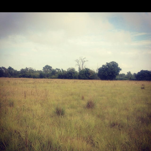Morning walk in the veld