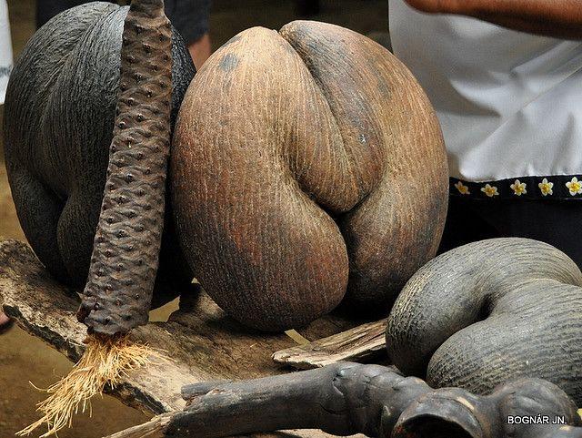 Coco de Mer - O famoso Coco-de-Mer, ou Coco-do-Mar, tido como a maior semente do mundo e cuja forma assemelha-se à nádegas humanas. Durante muitos anos, os navegadores pensaram que ele crescia no fundo do mar, uma vez que só o encontravam flutuando. É produzido por uma palmeira, a Lodoicea maldivica, endêmica das ilhas de Praslin e Curieuse, porém, nos dias atuais alguns exemplares já foram introduzidos em outras ilhas do arquipélago.