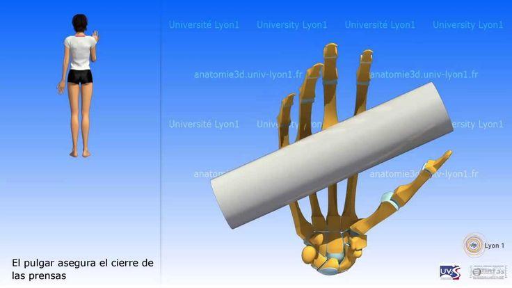 28 mejores imágenes en anatomia 3D HUESOS en Pinterest | Huesos ...