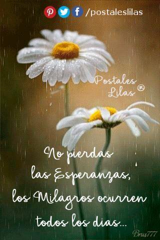 No pierdas las esperanzas..... http://www.postaleslilas.com.ar