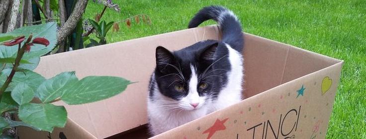 """"""" O 25 TL'lik hediye çeki benim olacak! """" diyen tatlı kedi bakışlarıyla herşeyi anlatıyor! Siz de en yakın dostunuzun bir kutu içinde çekilmiş fotoğrafını mailto: sosyalmedya@altincicadde.com'a gönderin, 25 TL değerinde hediye çekinin sahibi olma şansını yakalayın!"""