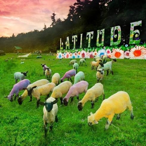 Glatso is done, Count Down to Latitude festival starts, July 2013!!! #festival #latitude #summer #duneshoes #dunelondon