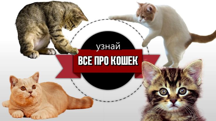 🐾 Как дрессировать кошку – как правильно кошку воспитывать и перевоспиты...