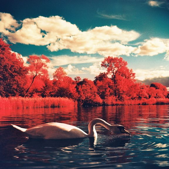 Unreal picture by lazybuddhaPhotos, Lomography, Colors Infrared, Stockholm Sweden, Red White Blue, Landscapes, Infrared Film, Photography, Cameras