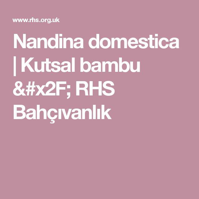 Nandina domestica |  Kutsal bambu / RHS Bahçıvanlık