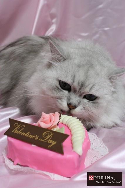 画像B: バレンタインもらったニャ♪/猫 ネコ cats  (Nestle PURINA ネスレ日本)