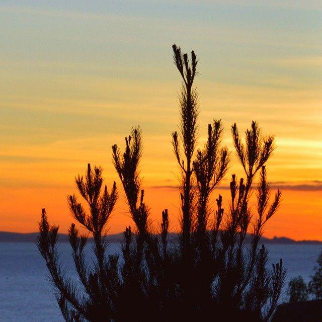 El único reinado que debe prevalecer triunfante en el mundo: #Plantae #beforesunset #copacabana #plant #kingdom #plants #forest #forest #sunset #Titicaca #Bolivia #Bolivie #bolivian #sunnyday #goodnight #skyporn #instatravel #instagood #instamood...
