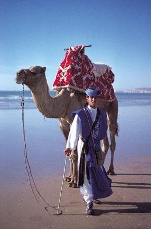 Atlantic Wild Ocean Camel Trek Morocco