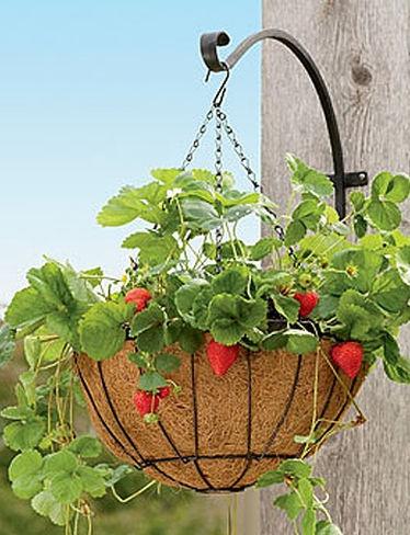 Hanging strawberry basket