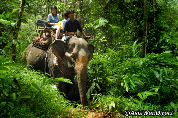 Riding an elephant in  Chaing Mai Thailand was amazing! Highly recommend taking a ride in a Tuk Tuk too.
