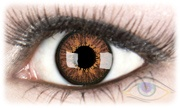 Europa Chestnut Contact Lenses