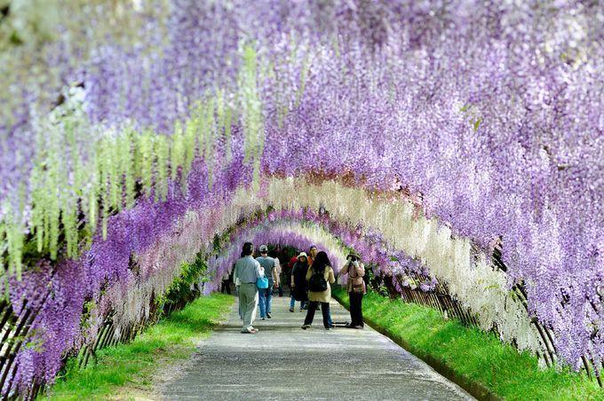 世界が認める日本の絶景!GWに行きたい旅行スポット10選 | Travel.jp[たびねす]