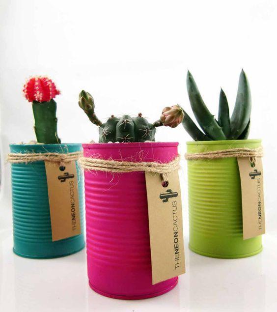 Selection of Splendid 29 Cacti in DIY Flower Pots
