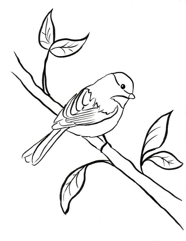 Chickadee Coloring Page Az Coloring Pages Clipart Best