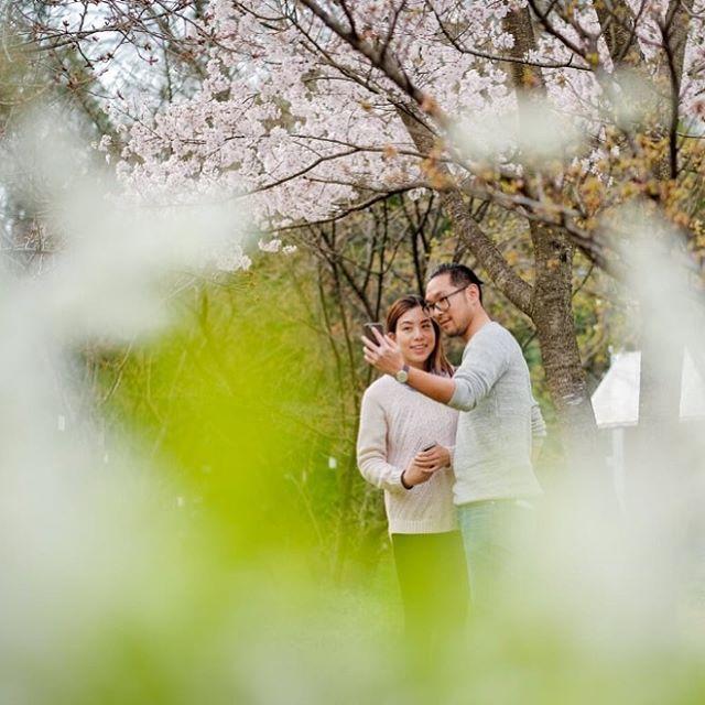 【photomichi】さんのInstagramをピンしています。 《proposal photo session 1  Lovely couple from #hongkong in the last April :-) #去年の桜物語 ②  香港のお客さまのプロポーズ・フォトセッション。  彼女はカメラの存在にも全く気づいていません。  #これぞドキュメンタリー  #ステキな隠し撮り  #オフィシャルフォトグラファー なのに、何故かちょっぴり罪悪感 . 。・°°・・°°・。 .  #fujifilm #xt1 #xf56mmf12 #jpg  http://camera-ai.com . *Instagramからはプロフィールのリンクをご利用ください ======================== #michiphotography  #ウェディングそして人生を豊かにする写真 .  #kyoto #japan #イギリス #overseas #旅 する #ウェディングフォトグラファー #weddingphotographer . #さりげなく深い #桜 #プロポーズ…