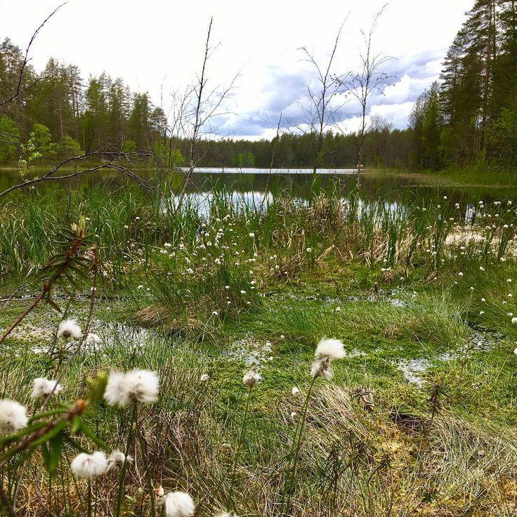 """20 tykkäystä, 3 kommenttia - Tomi Sirviö (@tomi.sirvio) Instagramissa: """"Juhannuspatikointia Rokuan upeissa maisemissa. #midsummer #rokua #suomi100 #finnishnature"""""""