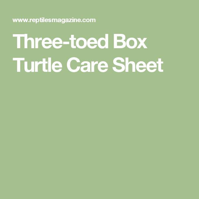 box turtle cracked shell care