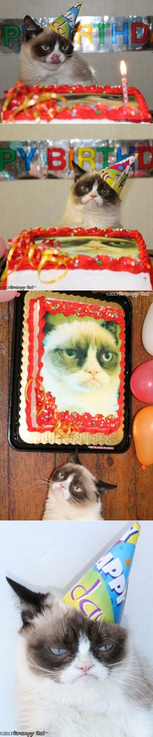 """Grumpy Cat's 1st Birthday! She looks like she's thinking, """"I didn't even want this!"""""""
