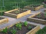 Raised beds...neat and orderly!