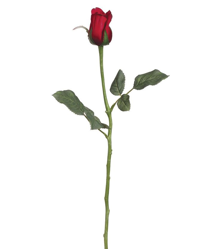 rose bud christian singles The meaning of a single rose   the most meaningful flower of all is considered to be the red rose a single red rose is now usually used to send a message of love.