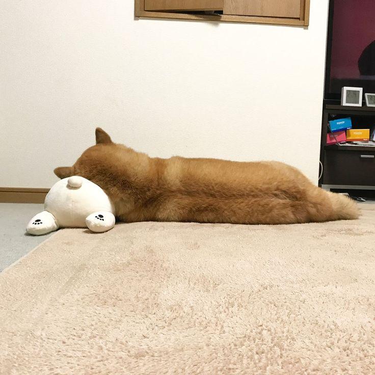 いいね!81千件、コメント492件 ― Shinjiro Onoさん(@marutaro)のInstagramアカウント: 「Good night!!✨✨まるのほっぺはお餅じゃないんだからっ #全く #オコだよ #わしゃ先に寝る」