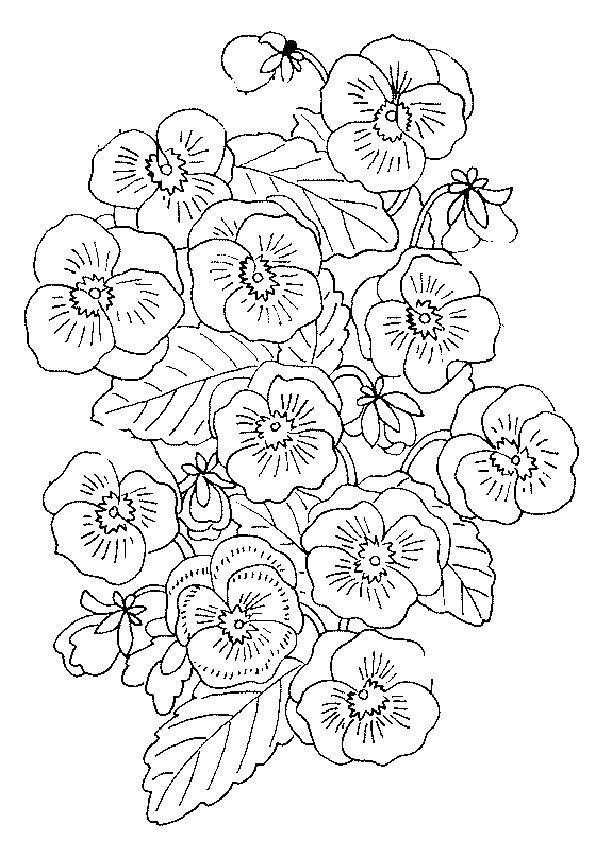 Malvorlagen- Blumen 8   coloring 3   Pinterest