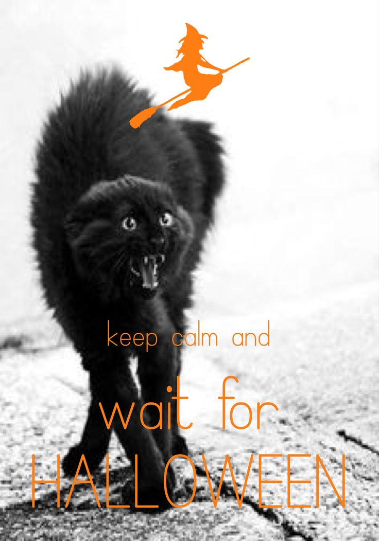 Keep Calm And Howl At The Moon