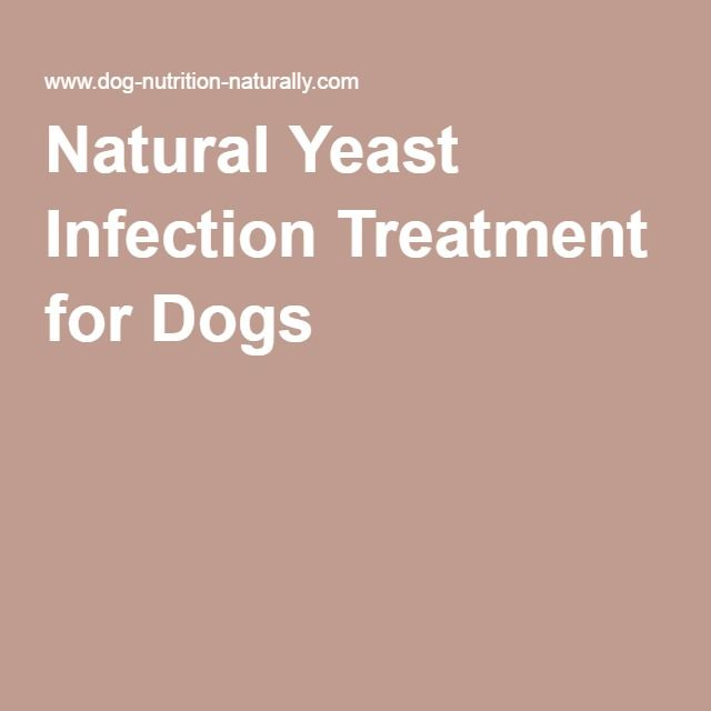 How To Get Rid Of Candida Yeast In Dogs