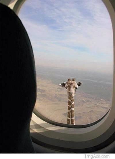 funny animal photobomb amazing animal stories 02