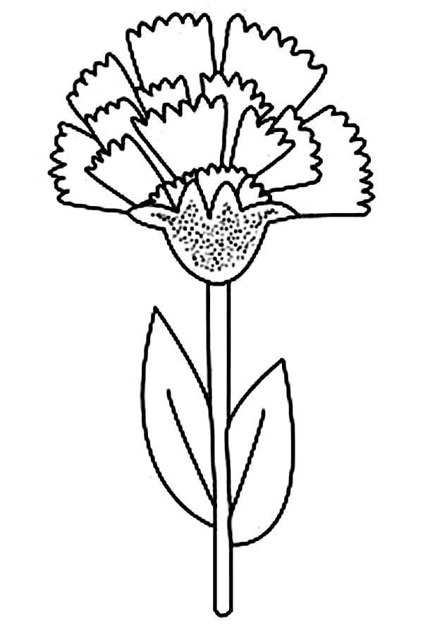 Ohio State Flower Carnation Coloring Page : Coloring Sun